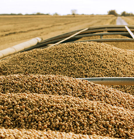 soybeans02